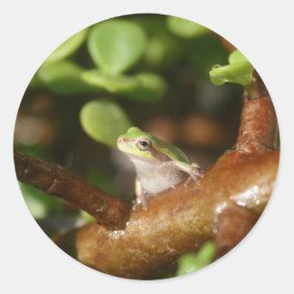 Rana arbórea lista para saltar de árbol de los pegatinas redondas