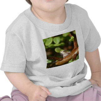 Rana arbórea lista para saltar de árbol de los camisetas