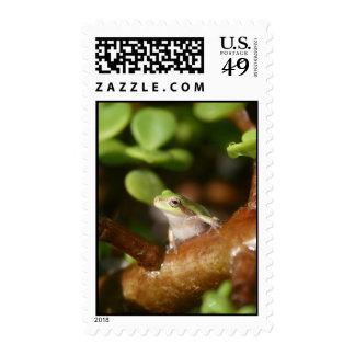 Rana arbórea lista para saltar de árbol de los envio