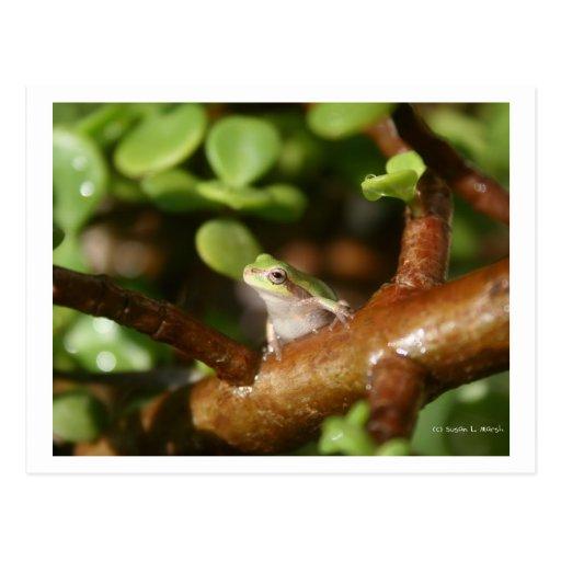 Rana arbórea lista para saltar de árbol de los tarjetas postales