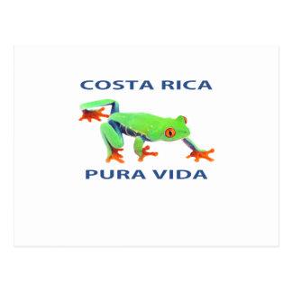 Rana arbórea observada rojo Costa Rica Pura Vida Postales
