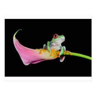 rana arbórea observada rojo en la flor de la cala tarjetas postales