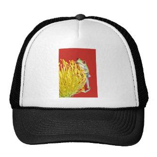 rana arbórea observada rojo gorras de camionero