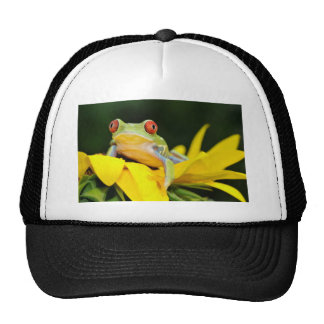 rana arbórea observada rojo gorra