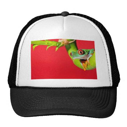 rana arbórea observada rojo gorros