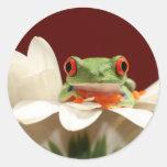 rana arbórea observada rojo pegatina redonda