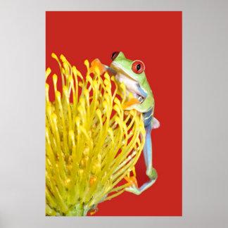 rana arbórea observada rojo póster
