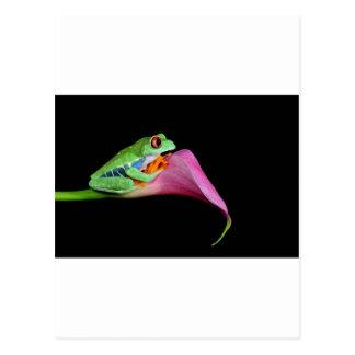 rana arbórea observada rojo tarjetas postales