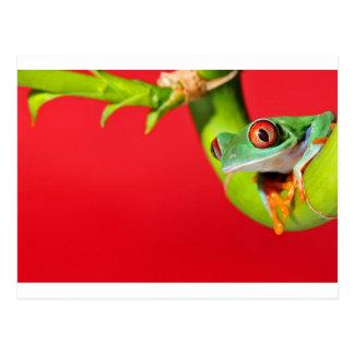 rana arbórea observada rojo tarjeta postal