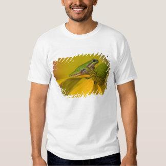 Rana arbórea pacífica en las flores en nuestro camisas