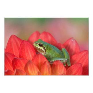 Rana arbórea pacífica en las flores en nuestro jar arte fotográfico