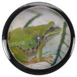 Rana arbórea pacífica en las flores en nuestro jar reloj acuario