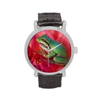Rana arbórea pacífica en las flores en nuestro relojes de pulsera