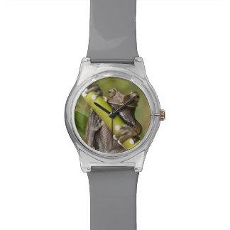 Rana arbórea prisionera Hyloscirtus de Tapichalaca Relojes De Mano