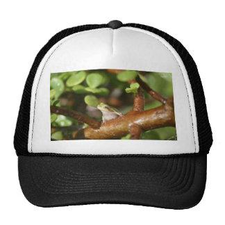 rana arbórea que mira de lado en foto del árbol de