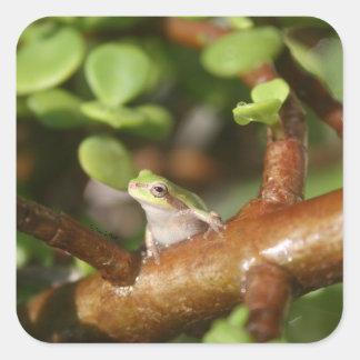 rana arbórea que mira de lado en foto del árbol de pegatinas cuadradases