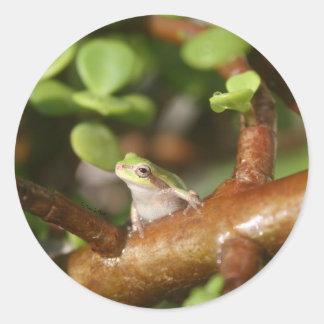rana arbórea que mira de lado en foto del árbol de pegatina redonda