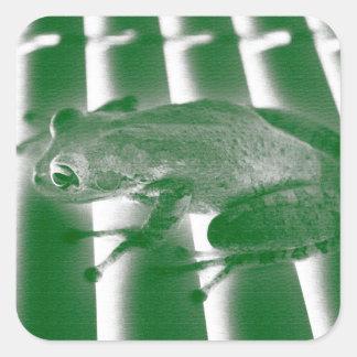 rana arbórea que mira el diseño animal del calcomania cuadradas