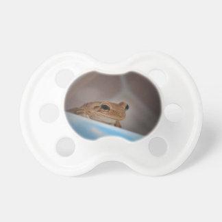 rana arbórea que mira el espectador en azul chupete de bebe