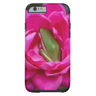 Rana arbórea que oculta en rosa