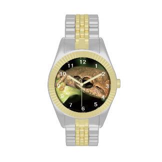 rana arbórea relojes de mano