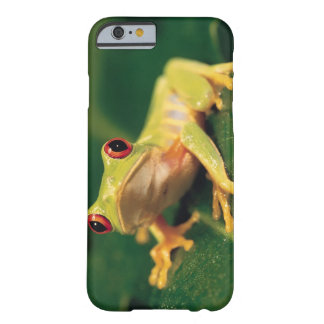 Rana arbórea roja del ojo funda para iPhone 6 barely there