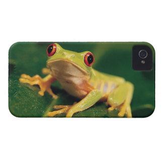 Rana arbórea roja del ojo iPhone 4 protector