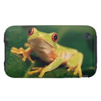 Rana arbórea roja del ojo tough iPhone 3 fundas