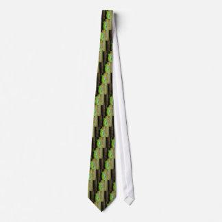 rana arbórea rojo-observada corbata