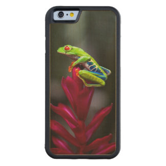 rana arbórea Rojo-observada Funda De iPhone 6 Bumper Arce
