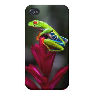 rana arbórea Rojo-observada iPhone 4 Carcasas