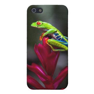 rana arbórea Rojo-observada iPhone 5 Funda