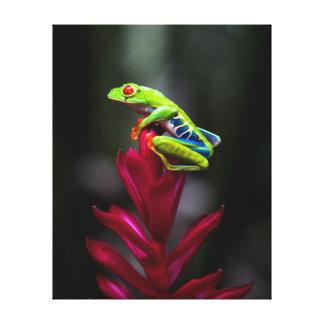 rana arbórea Rojo-observada Lienzo Envuelto Para Galerías