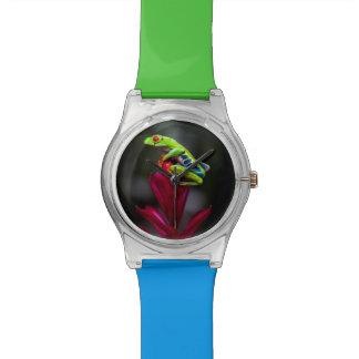 rana arbórea Rojo-observada Reloj