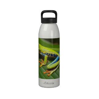 Rana arbórea Rojo-Observada Botella De Agua