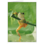 Rana arbórea tarjeta de felicitación