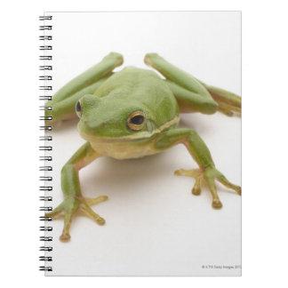 Rana arbórea verde cuadernos