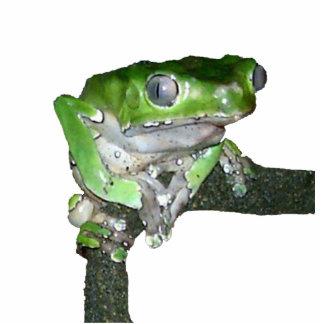rana arbórea verde esculturas fotográficas