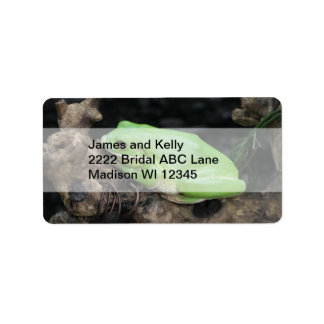 Rana arbórea verde etiquetas de dirección