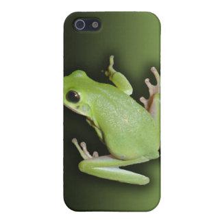 Rana arbórea verde iPhone 5 carcasa