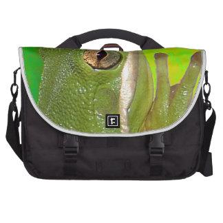 Rana arbórea verde hermosa giviing la muestra de p bolsas de ordenador