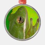 Rana arbórea verde hermosa giviing la muestra de p ornamentos de reyes magos