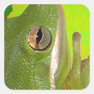 Rana arbórea verde hermosa giviing la muestra de colcomanias cuadradases