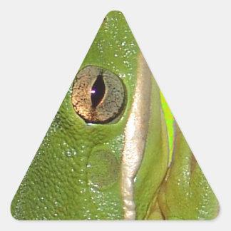 Rana arbórea verde hermosa giviing la muestra de colcomanias trianguladas