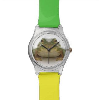 Rana arbórea verde (Hylidae cinerea) Relojes