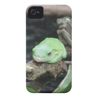Rana arbórea verde iPhone 4 fundas
