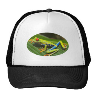Rana arbórea verde observada rojo gorra
