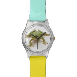 Rana arbórea verde reloj de mano