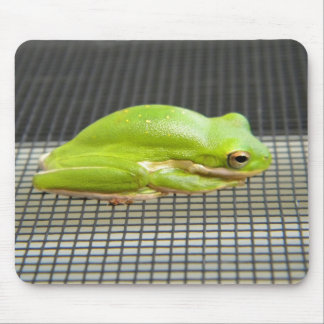 Rana arbórea verde mouse pad