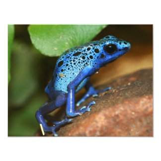 rana azul de la flecha del veneno invitaciones personalizada
